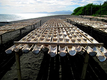 Fig. 2. Rows of half-cut bamboo used in drying sea water