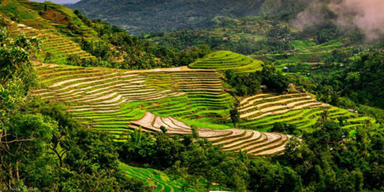 Rice terraces in the highlands of Miag-ao . Photo by Nick Foster.