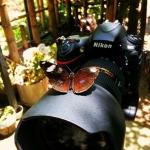 posecion-butterfly-on-camera-sulu