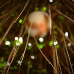 posecion-raindrops-on-the-trellis-roots